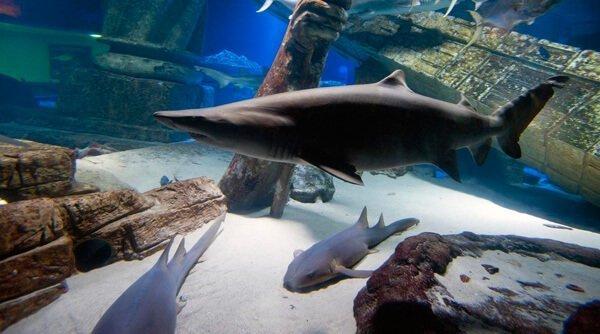 Long Island Aquarium